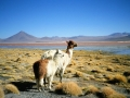 bolivia-106-uyuni-laguna-colorada