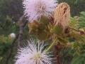 vegetation-2