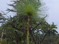 vegetation-3