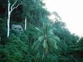 costa-rica-045-corcovado-np