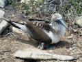 ecuador-078-galapagos-espanola