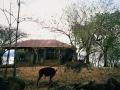 honduras-082-amapala